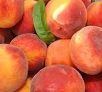 Cresthaven Peach Picture