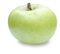 Mutsu Apple Tree Picture