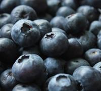 Centurion Rabbiteye Blueberry Picture