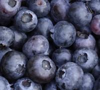 Delite Blueberry Picture