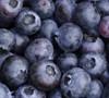 Delite Blueberry