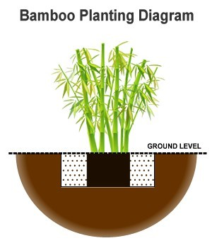 garden design with how to plant bamboo plants with landscaping small backyard from