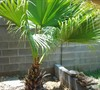 My palm tree
