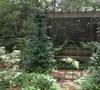 Pergola Garden Picture
