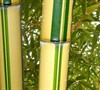 Green Stripe Vivax Bamboo