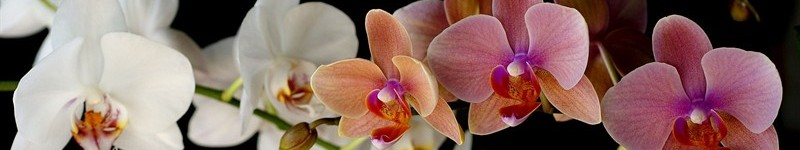 An Introduction To Orchids