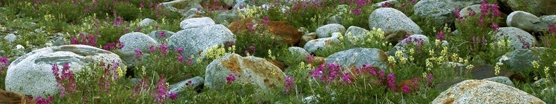 Introduction to Rock Gardening