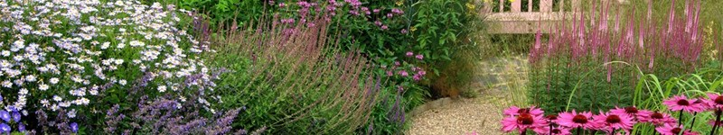 Cottage Garden Plant Choices