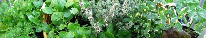 How To Fertilize Herbs