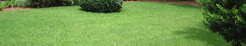 How To Maintain A Zoysia Grass Lawn