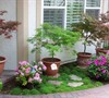 Japanese Maples in front entry garden