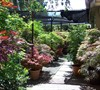 Rear Japanese Maple Garden