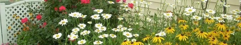 Winterizing The Perennial Garden
