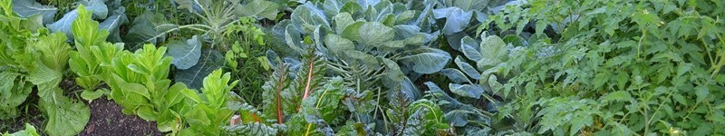 Planting Your Fall Vegetable Garden