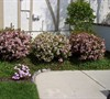 Picture about What Are Some Good Foundation Plants For In Front Of A Porch On My Home?