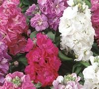Garden Stock Picture