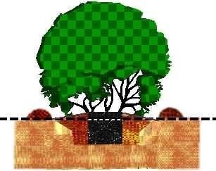 Diagram for planting a shrub