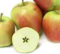 Ein Shemer Apple Tree Picture