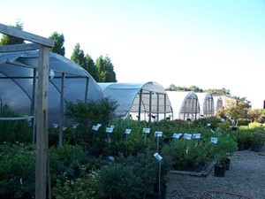 Greenhouses at Nursery