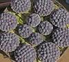 Mysore Raspberry Picture