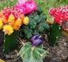Secret Succulent Garden Surprise Kit