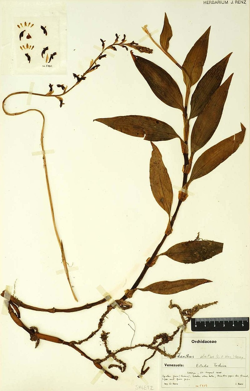 Digitized%20Herbarium%20Specimen
