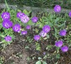 Picture about Perennial Plant
