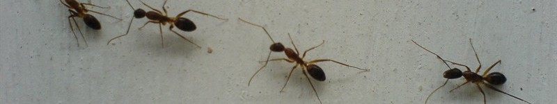 How To Repel Ants & Other Insects In The Garden