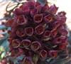 Blackbird Euphorbia
