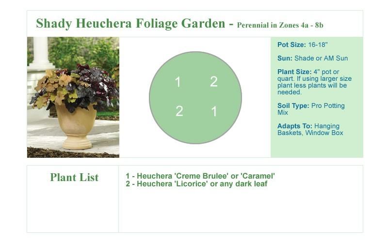 Shady Heuchera Foliage Garden