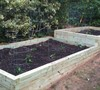 Initial 2010 Planting after build-out of raised bed