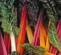 Bright Lights Swiss Chard Picture