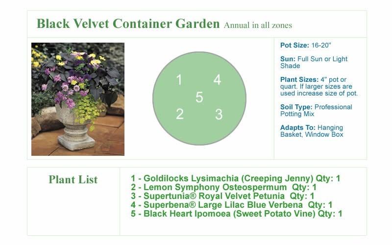 Black Velvet Container Garden Design