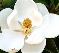 D. D. Blanchard Magnolia Picture