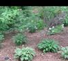 Mers' garden 2 5/17/2011