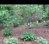 Mers' garden 3 5/17/2011