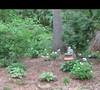 Mers' garden 4 5/17/2011