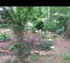 Mers' garden 6 5/17/2011