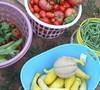 Veggie Garden 2010 Picture