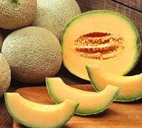 North American Cantaloupe Picture