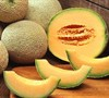 North American Cantaloupe