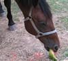 Pye likes his watermellon too!