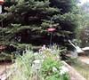 Bee/Hummingbird Garden Picture