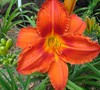 Daylily Garden