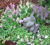 Frog Garden Picture