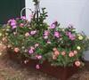 Garden Shed Planter Box