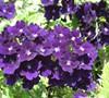 My Gardens