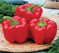 Red Bell Pepper Picture