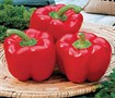 Picture of Red Bell Pepper