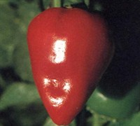 Pimento Pepper Picture